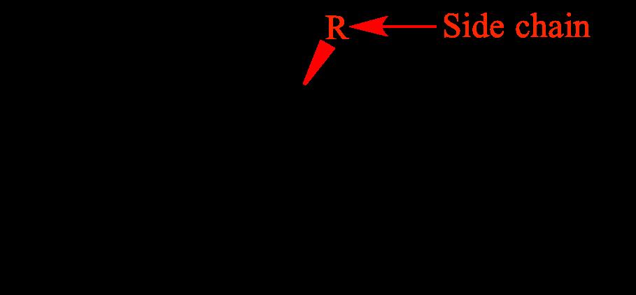 AMINO ACIDS ORGANIC CHEMISTRY PDF