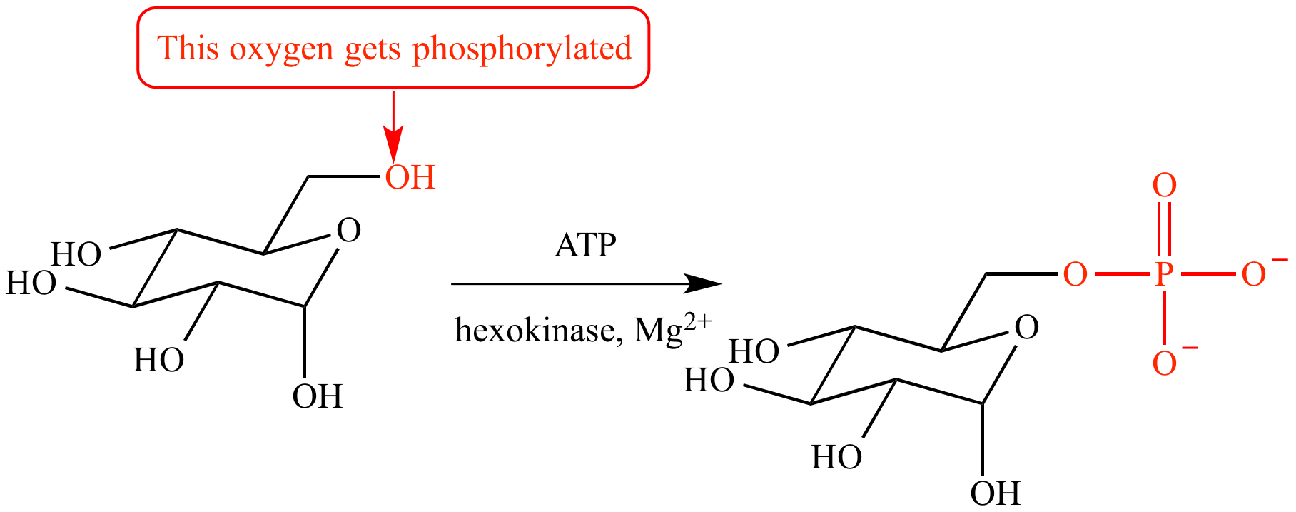 A phospholipid